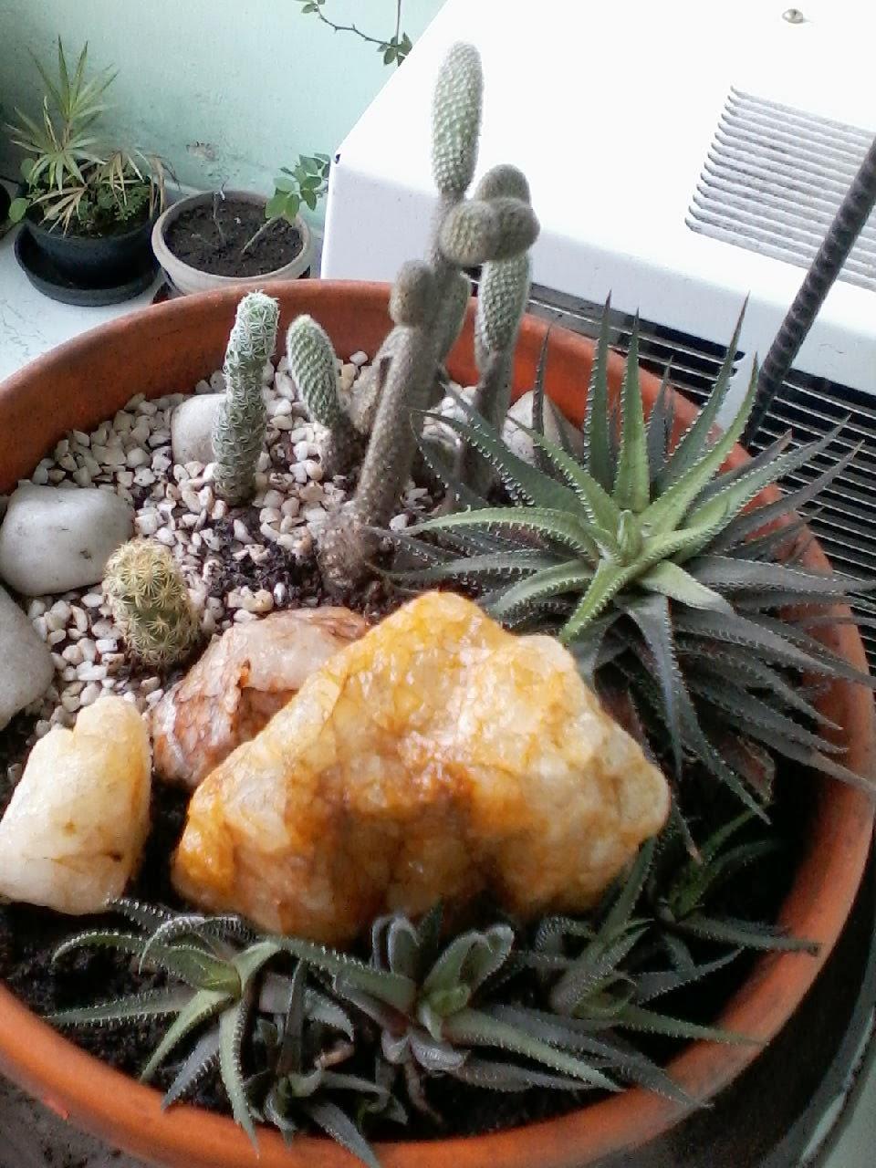 mini jardim cactos suculentas : mini jardim cactos suculentas:CICLICCA: Mini jardim de cactos e suculentas