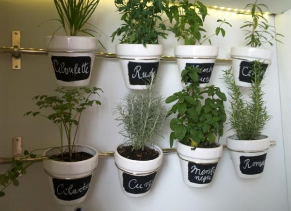Tu mejor sonrisa en cualquier ocasi n cultivar plantas - Plantar plantas aromaticas ...