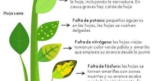 La mar de verde carencia de nutrientes en las plantas for Potasio para plantas