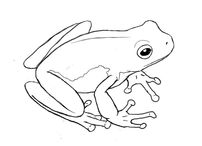 Line Drawing Frog : How to draw a frog central