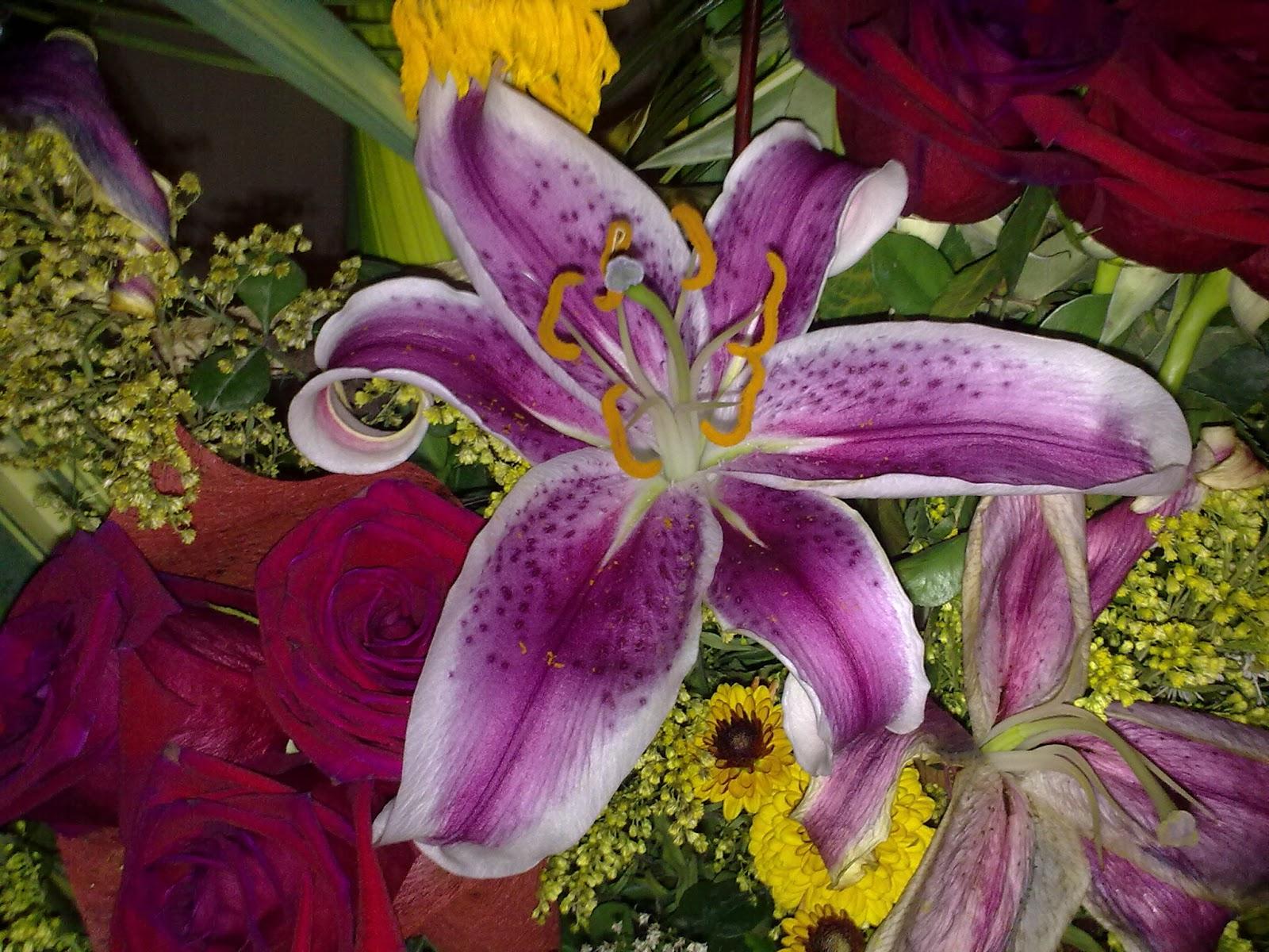 Fotos de plantas comunes en ecuador flores sin nombre for Plantas ornamentales del ecuador