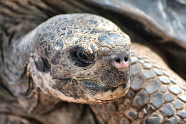 Visita al Bioparc de Fuengirola, un nuevo concepto de Zoo de inmersión