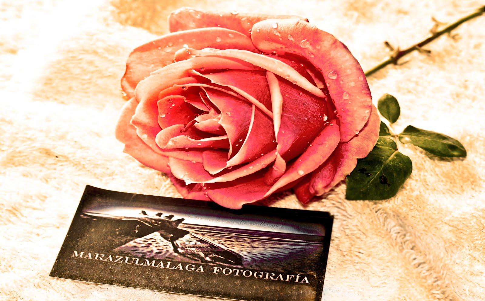 rosas y mares