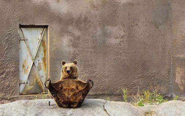 oso haciendo yoga