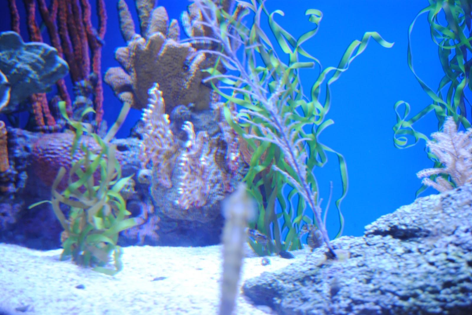 Getting Schooled Ripley 39 S Aquarium In Pictures