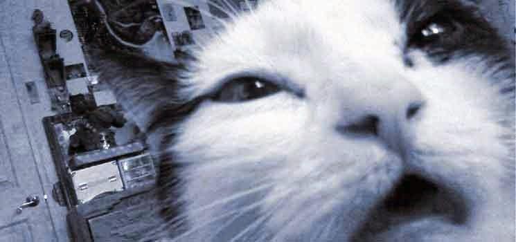 Kucing bersin