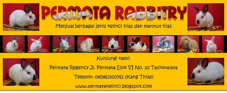 PERMATA RABBITRY