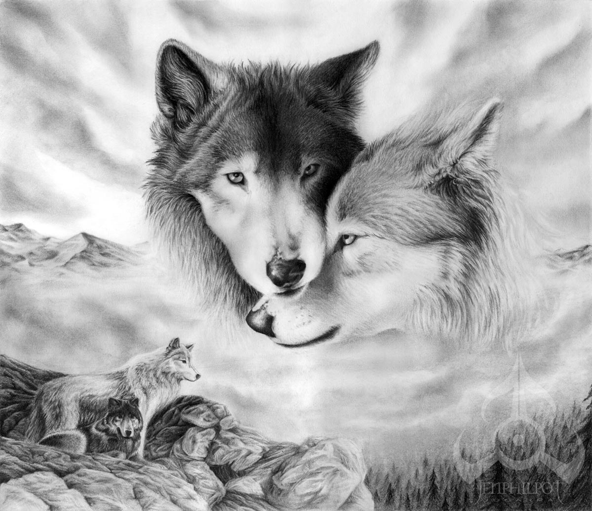 Drawings Of Wolves: White Wolf : Jen Philpot : Exceptional Artist In