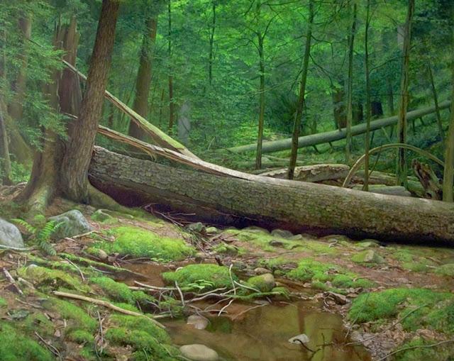 paisajes-con-rios-y-arboles-verdes