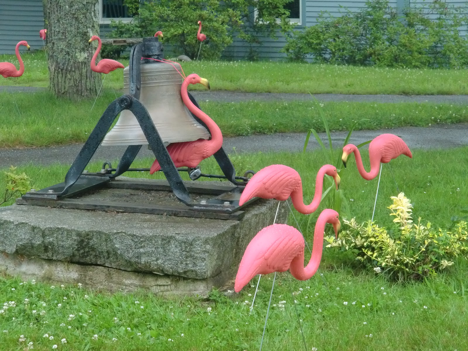 Nosing Around Maine: Flamingo