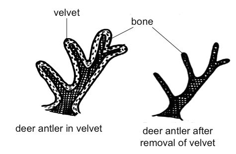 Straightforward Methods For Deer Antler Review - The Best Routes