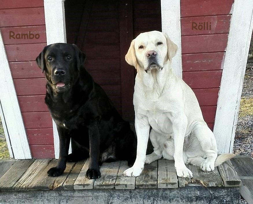 Rambo & Rölli