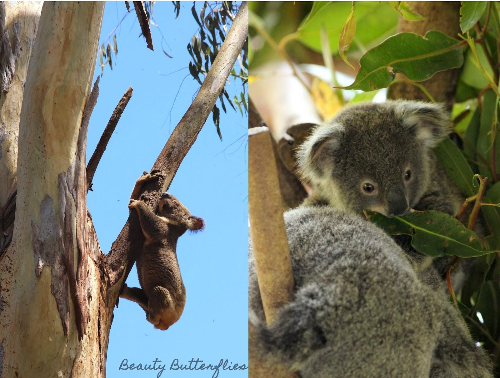 Amazing Australia Die Australische Tierwelt