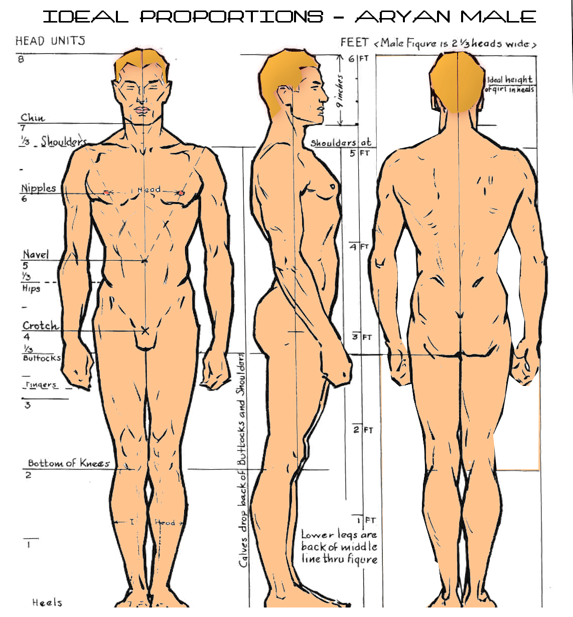 Ideal male body proportions male models picture for Size and proportion