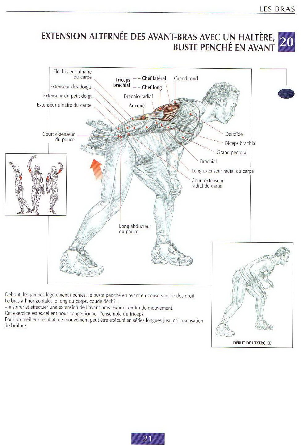 TRICEPS exercices | guide de musculation