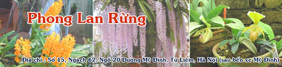 Website về Hoa Lan, bán Phong Lan Rừng | Hướng dẫn cách trồng lan