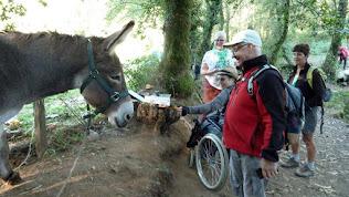 een ezels-stempel voor een wortel