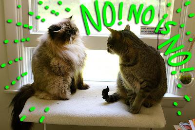 No is no-04