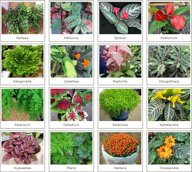 Plantas y flores plantas muy delicadas for Cuales son las plantas ornamentales y sus nombres