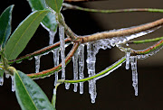 Cool Pictures (bayicicles)