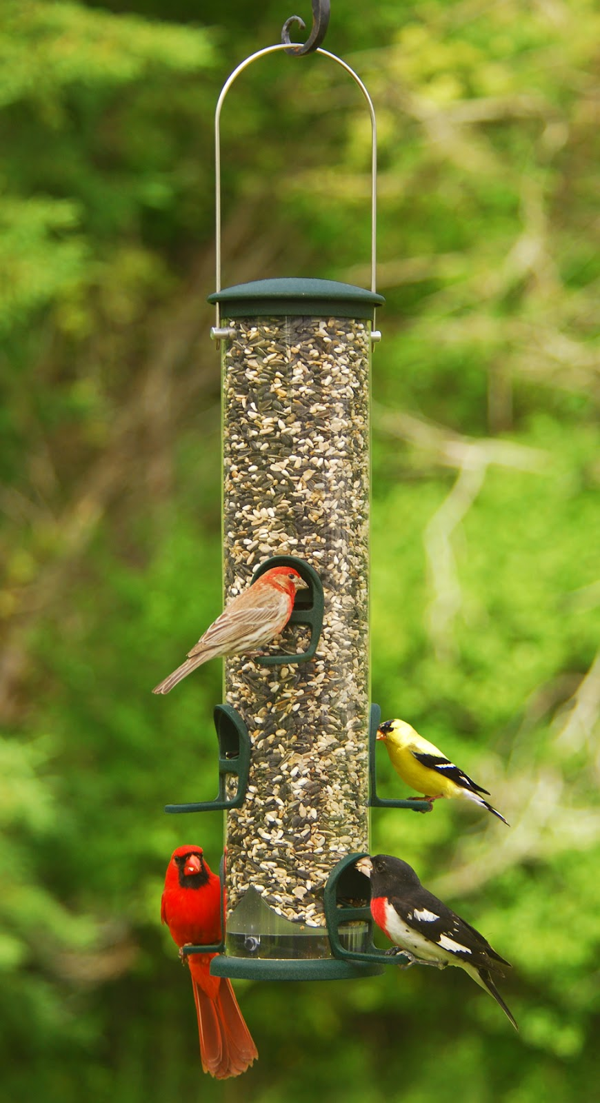 Wild Birds Unlimited: Can birds become dependent on bird feeders?