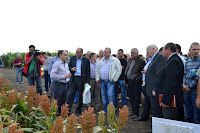 MNAU news. The Field Day on the technology of cultivation of sorghum (September 10, 2013).