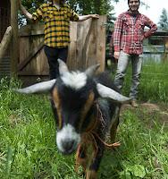 Across Tundras goat