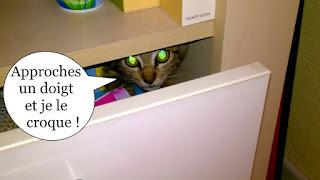 Chaton caché dans un tiroir.