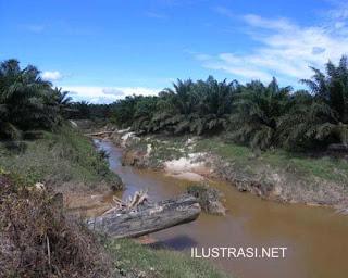 Ribuan Udang Mati, Sungai Tercemar Limbah