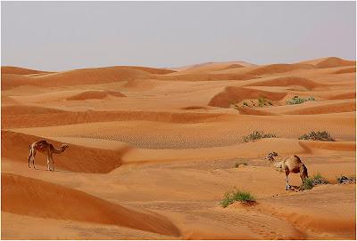 Arabia Saudyjska - czyli szewc bez butów chodzi :)