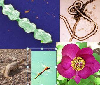 חיידקים, נגיפים, ושאר ירקות