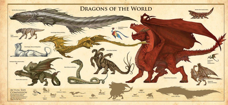 dragon categories