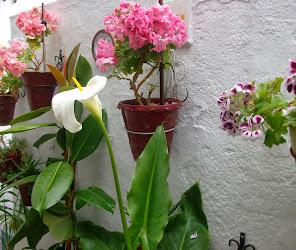 Flores de casa.
