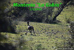 """MONTERÍA """"LA GOBIA"""" 2/1/2021"""