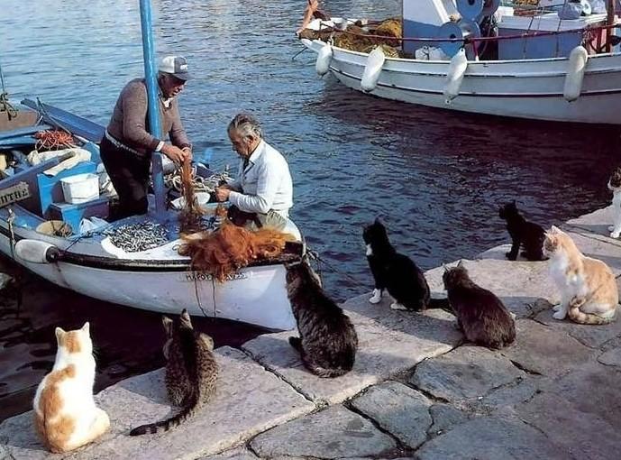 Gatos esperando ganhar peixes fresquinhos
