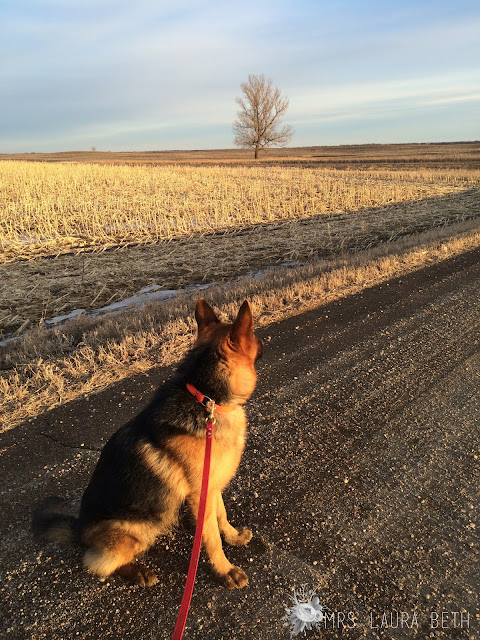 Mrs. Laura Beth, blog, GSD, German Shepherd, Dog Death,