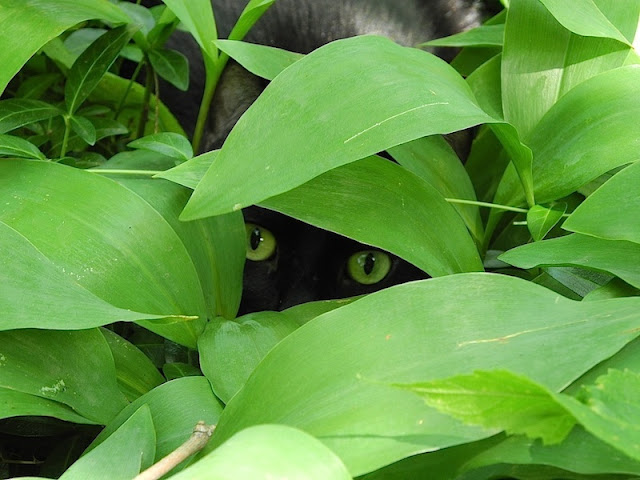cat hides in bushes, funny cat photos
