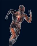 A importância do desenvolvimento das Capacidades físicas