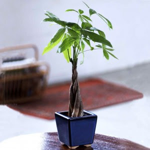 Office Plant Gifts U2013 Perfect Presents For Office Workers