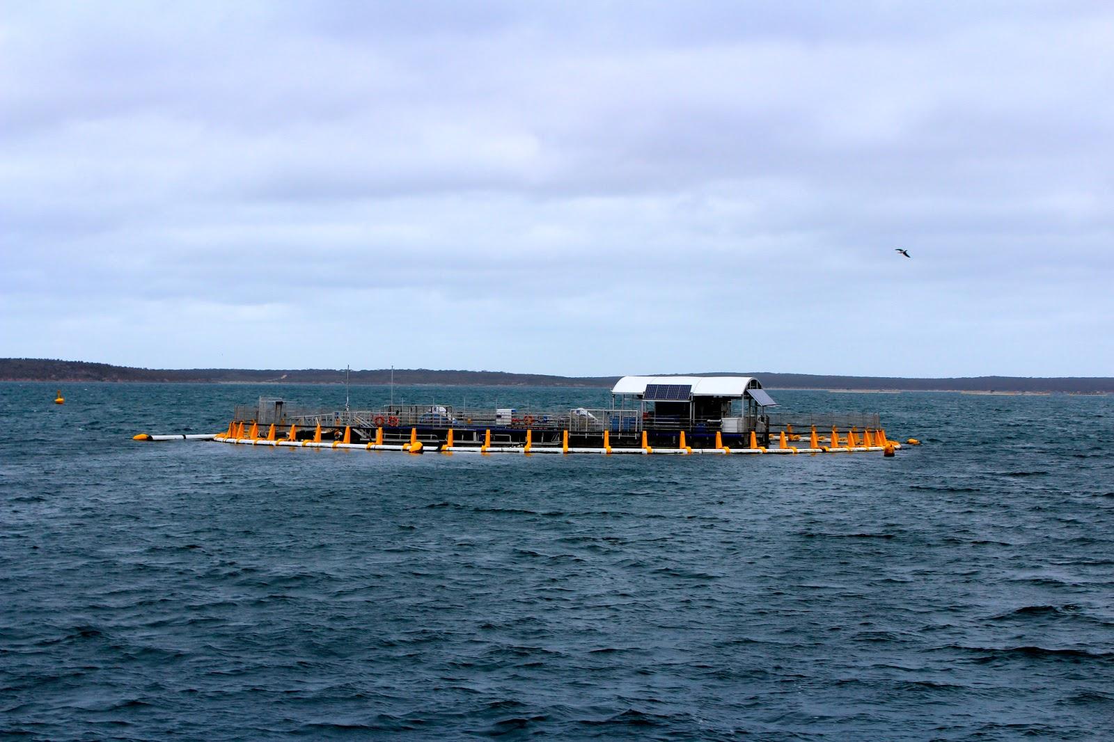 Port Lincoln Australia  City new picture : Nemo's Great Adventure: PORT LINCOLN, AUSTRALIA BOUND