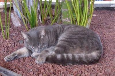 śpiący jak kot? :)