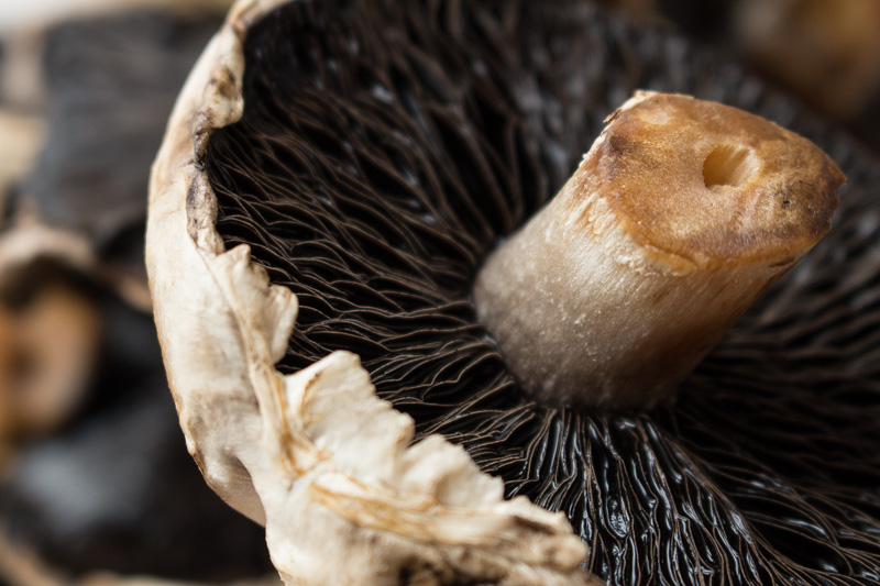 Portobello Mushrooms | Svelte Salivations