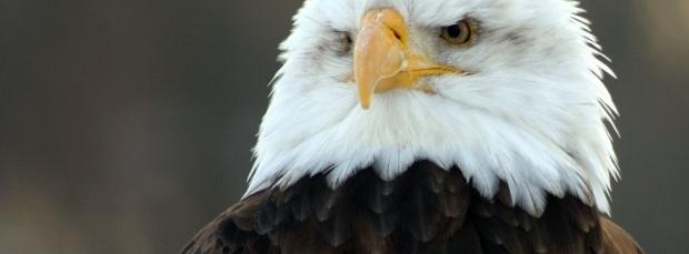 guzel kus facebook kapak resimleri+%252819%2529 35 En Güzel Facebook Kuş Kapak Resimleri indir