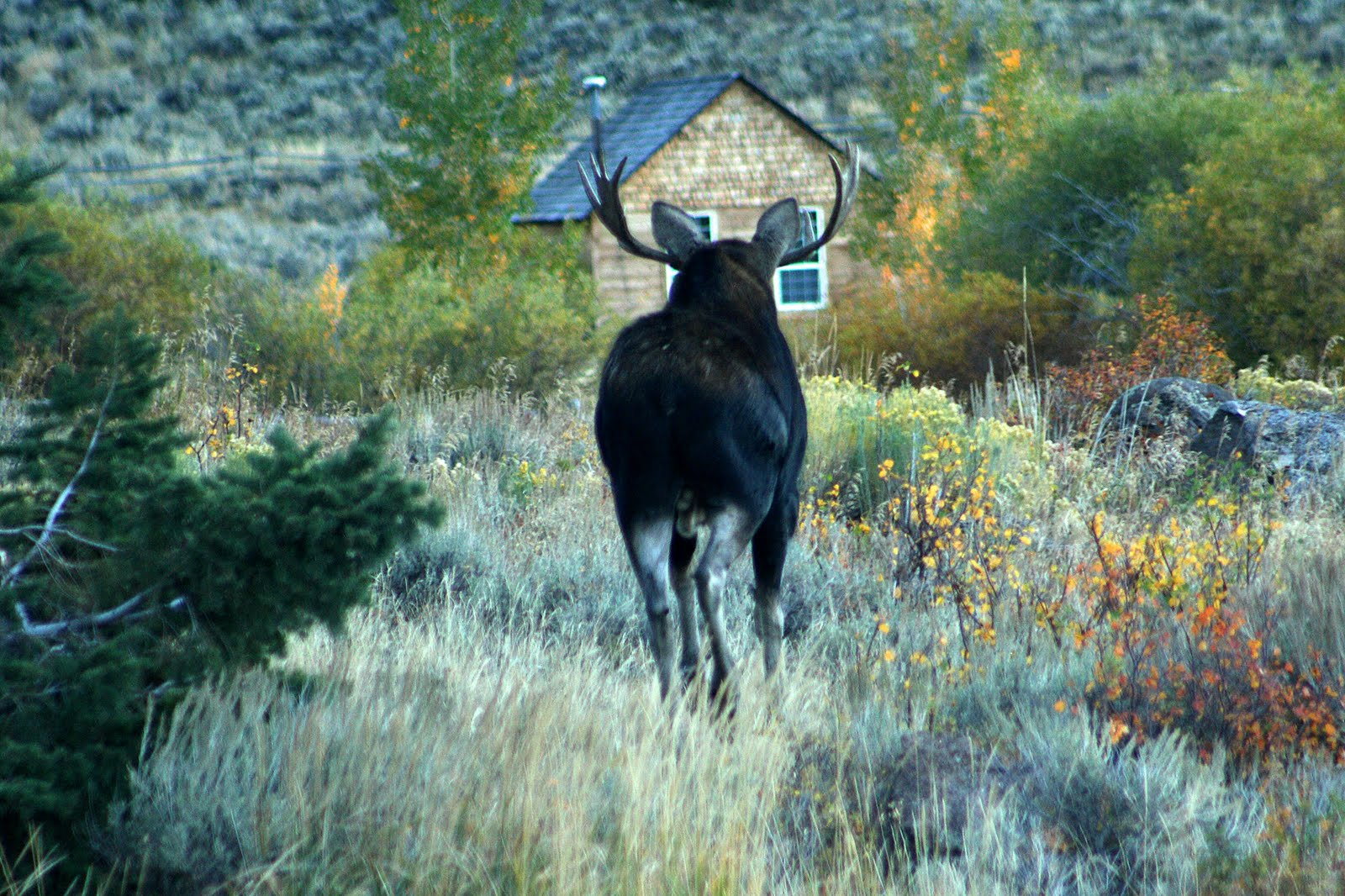 elk lake news life at a montana mountain lodge a moose comes to