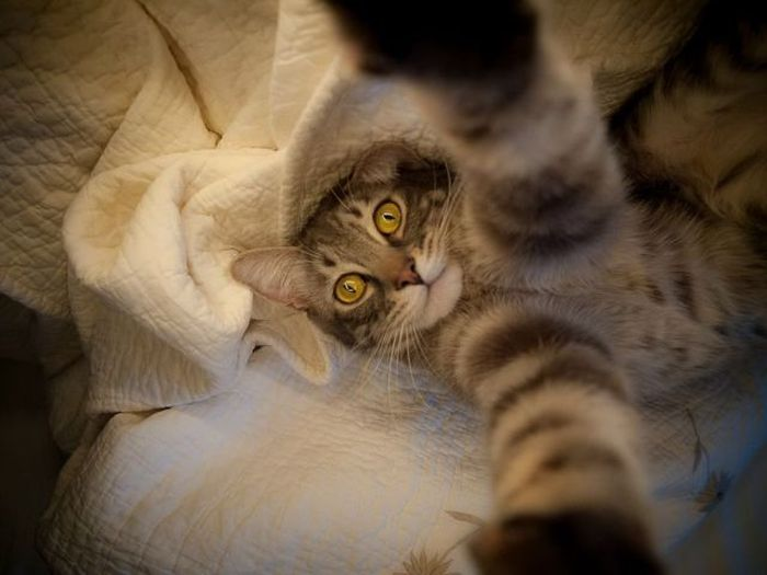 Funny cats - part 167, funny cat photos, cat picture, adorable cat