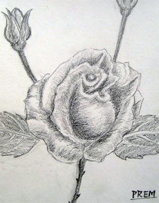 Rose Sketch for Practice