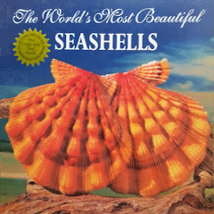 The World´s most Beautiful SEASHELLS