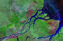 amazon estuary