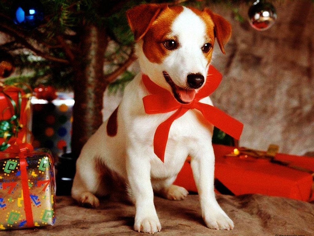 Dog Christmas Gift, Free Ideas - Neat-Pets ( Dogs & Cats )