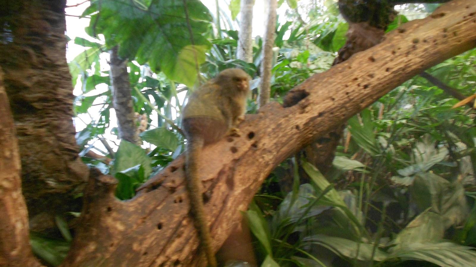 ... Tropical Rainforest Monkeys , Cute Rainforest Animals , Rainforest